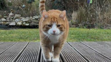 Katzenfutter hoher Fleischanteil