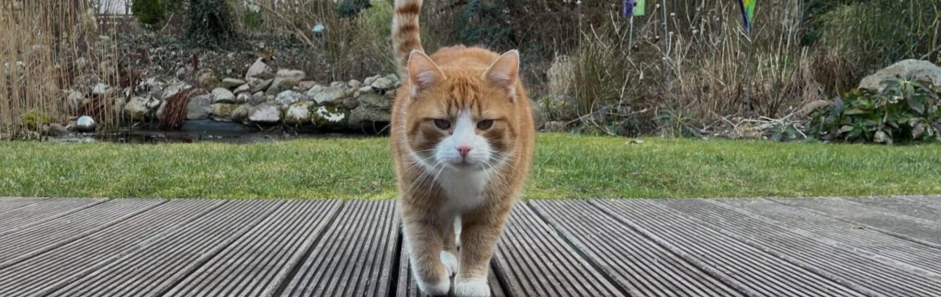Anifit Katzenfutter – Das beste Katzenfutter 2021